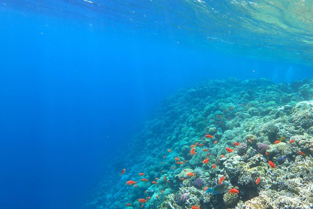 Korallenriff bei Dahab, Foto: Nathalie Hurova / Unsplash