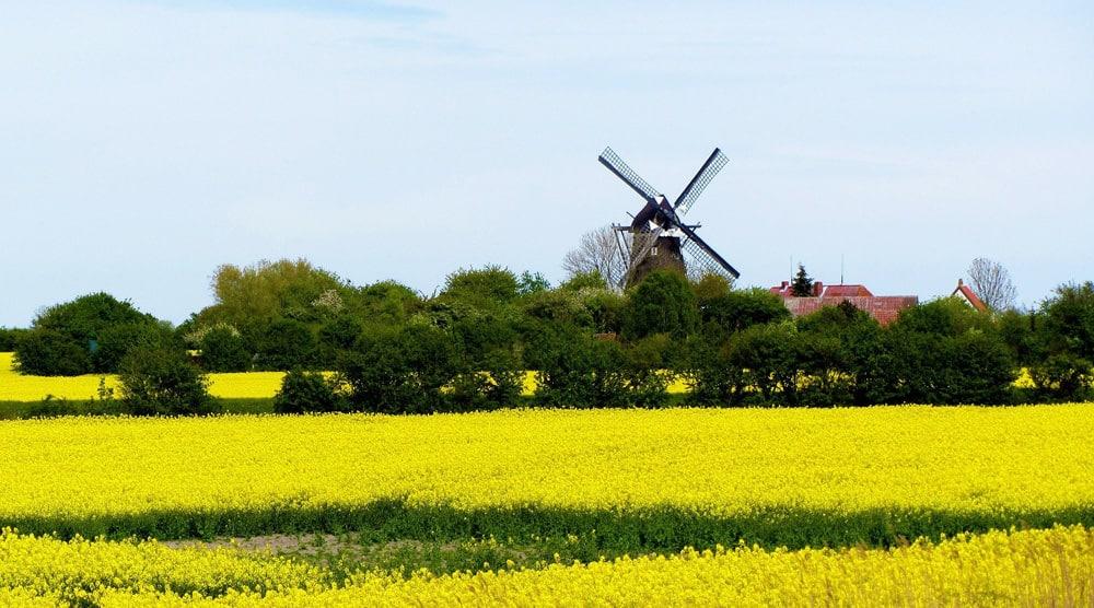 """Windmühle """"Jachen Flünk"""" auf Fehmarn, Foto: Ronile / Pixabay"""