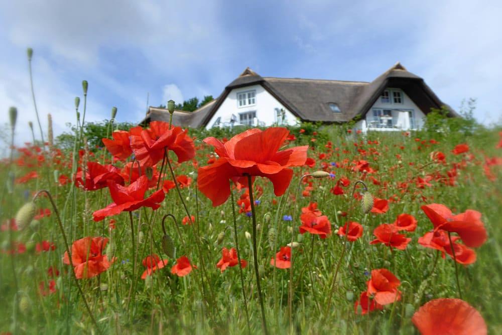 Statt Hotel lieber ein Ferienhaus oder eine Ferienwohnung? Kein Problem aus Usedom, Foto: TorstenBraun / Pixabay