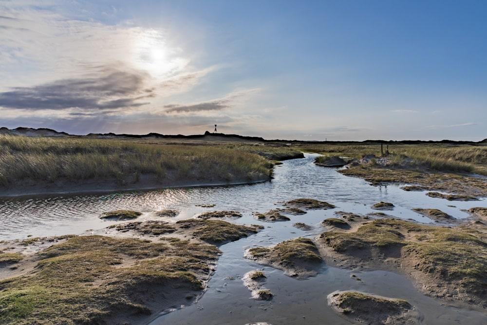 Die Natur auf Norderney ist wunderschön, Foto: Dominik Lückmann /  Unsplash