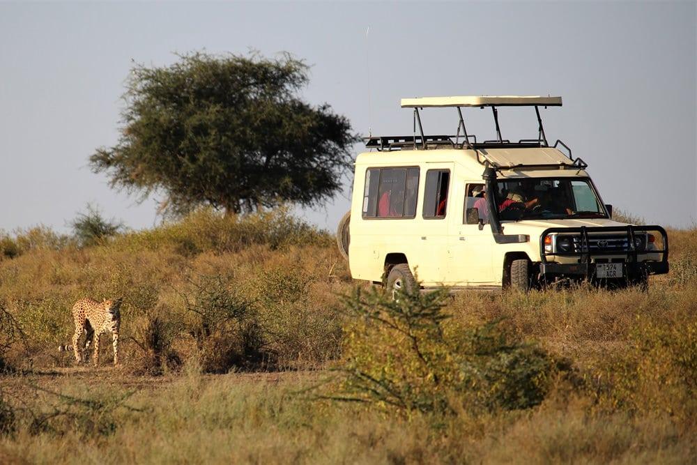 Bei einer Safari im Serengeti Nationalpark können unterschiedliche Tiere beobachtet werden, Foto: >>> niedblog.de / Unsplash