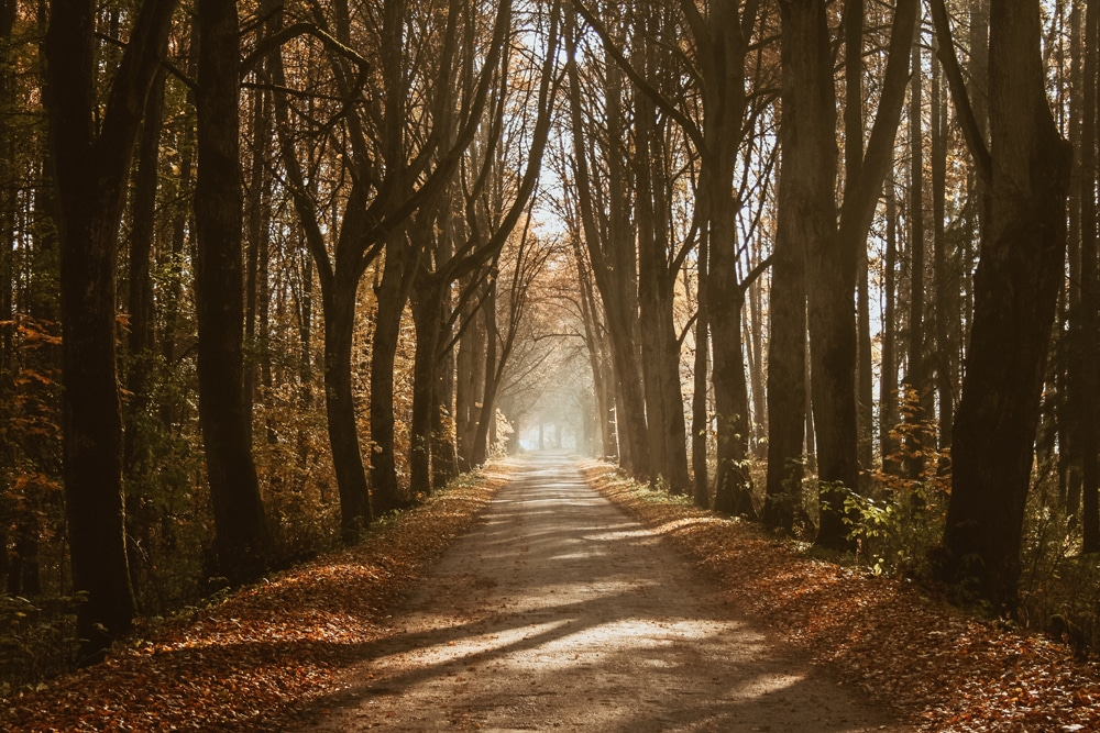 Wald bei Gizycko, Foto: Cezary Kukowka / Unsplash