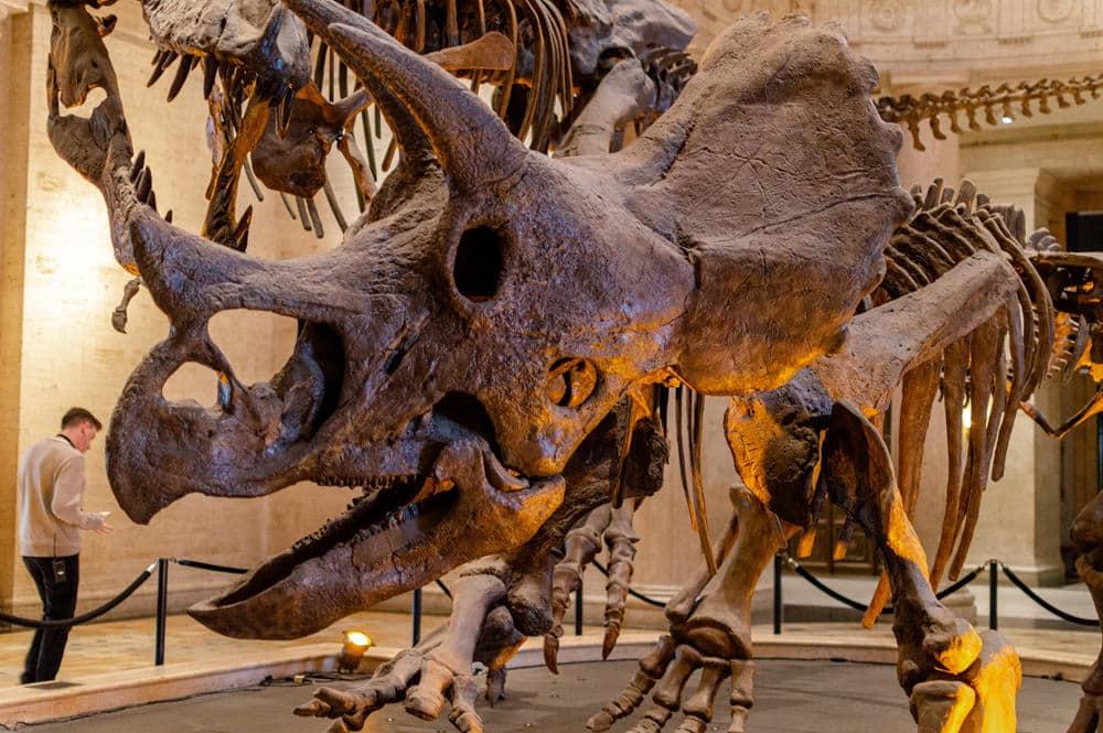 Interessante und beeindruckende Funde zeigt das naturhistorische Museum, Foto: Crisoforo Gaspar Hernandez / Unsplash